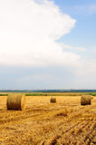 Golden Hay Bales on field after harvesting Royalty Free Stock Images