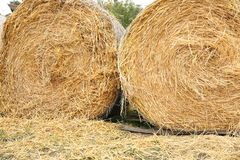 Golden hay bales in a field in the open air royalty free stock images