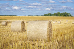 Golden hay bales on field in summer Stock Photography