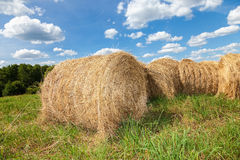 Golden hay bales on field under blue sky Royalty Free Stock Photo