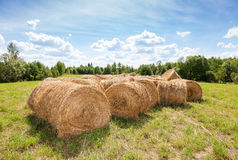 Golden hay bales on field under blue sky Royalty Free Stock Photography
