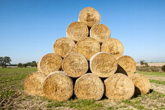 Golden hay bales harvested Royalty Free Stock Photos