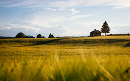 Golden hay field in countryside Royalty Free Stock Images