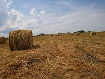 Golden hay field with different straw shades. The beautiful golden hay with different straw shades on a field royalty free stock photos