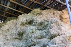 Golden Hay For Animals Stock Image