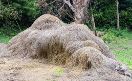 Golden hay pile. Royalty Free Stock Photo