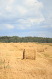 Golden Hay rolls royalty free stock images