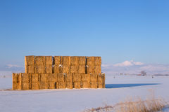 Golden Hay stacked in a field with snow capped mountains in the. Harvested hay stack in a snowy field. Colorado's Long's Peak and the front range in the stock photo