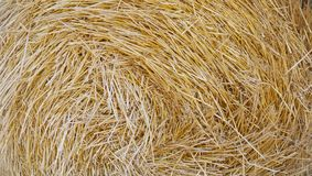 Golden hay stock rolled in a circle stock photos