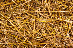 Golden hay straw texture Royalty Free Stock Photography