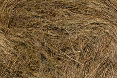 Golden hay - straw texture background, close up. Shot royalty free stock photo