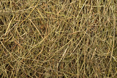 Golden hay texture background Stock Photo