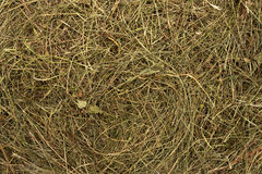 Golden hay texture background Royalty Free Stock Images