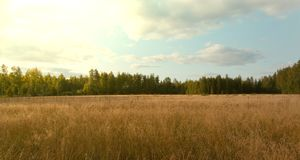 Golden hayfield in bright sunlight. Sunny hayfield in Finland. Autumn colors Stock Photos