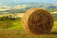 Golden hayfield in  tuscany Royalty Free Stock Image