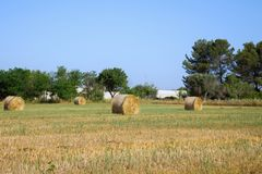 Golden haystacks in the beautiful landscape in apulian summer`s morning royalty free stock photos