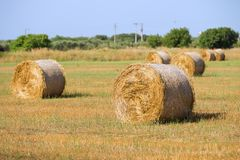 Golden haystacks in the beautiful landscape in apulian summer`s morning stock photography