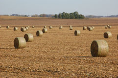 Golden haystacks on a field. Golden round haystacks on a field on a late fall day royalty free stock photos