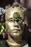 The third eye. Golden head with the third eye from the succulents plant royalty free stock photo