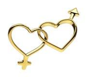 Golden heart rings linked together, gender symbols Royalty Free Stock Image