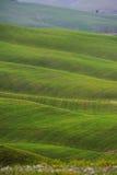 Golden hills Stock Images