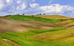 Golden hills of Orcia. Stock Images
