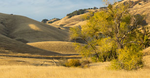 Golden Hills. Rolling hills and trees in the countryside Royalty Free Stock Photography