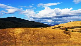 Golden Hills of Southern British Columbia. There is nothing prettier than the golden hills of southern British Columbia on a hot summer day. Sunshine and bright Royalty Free Stock Images