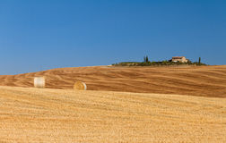 Golden hills Tuscany Stock Images
