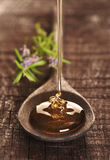 Golden honey Stock Images