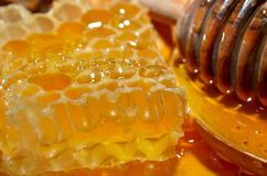 Golden honey Stock Photography