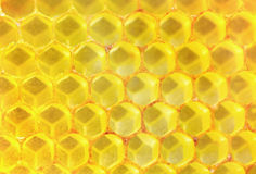 Golden honeycomb Stock Images