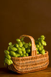 Golden hops in gab Royalty Free Stock Photo