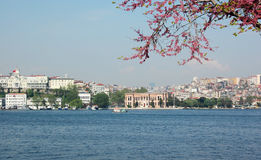 Golden Horn behind redbuds Stock Photos