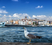 Golden Horn in Istanbul. Turkey Royalty Free Stock Photography