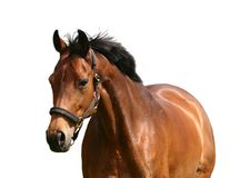 Golden horse Stock Images