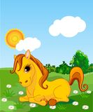 Golden horse. A cute horse sitting in the meadow  on a sunny day. Background is separate paths and can be moved or removed Royalty Free Stock Image