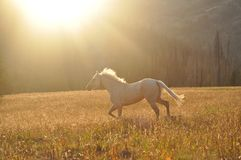 Golden Horse at the Golden Hour royalty free stock photos