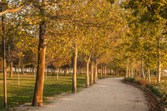 Golden hour and autumn in Madrid. Stock Images