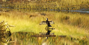 Free Golden Hour On The Estuary Stock Photos - 33069733