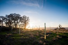 The golden hour, the sun is setting on the countryside near Stanford. Stroll near Stanford at the golden hour. Some tree sprouts are bathing in the afternoon royalty free stock photography