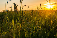 Golden Hour sun. A sunrise showing the beauty of golden hour through a field of long grass Royalty Free Stock Photography