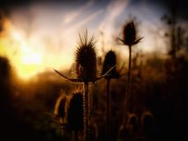 Golden Hour royalty free stock photo