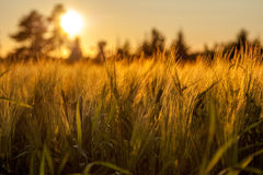 Golden Hour Royalty Free Stock Image