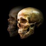 Golden human skull Stock Images
