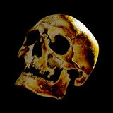 Golden human skull, lit from above and behind, closeup. stock images