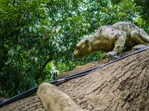 Golden Jaguar Tiger Statue on the Big lumber ,Electronic wire on the lumber,Old and broken tiger statue stock photography