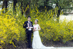 By golden jasmine flowers, a couple shot wedding photo. Wedding portrait, woman/bride wears white crown on her head, wears flower shape earrings, with white Stock Photography