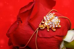Golden Jewelry Ladybug on Rose. Golden Jewelry Ladybug on Red Rose Petals Stock Images