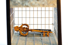 Golden key Royalty Free Stock Photography